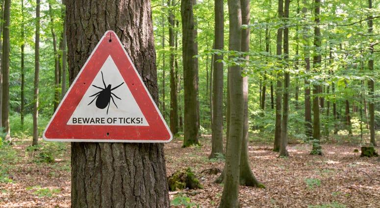 Beware of ticks