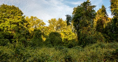 Long Island Preserve