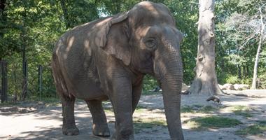 Maxine the elephant bronx zoo