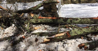 Westport, Connecticut Nor'easter Downed Tree