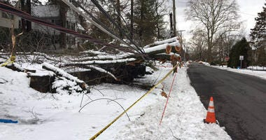 Tree Down In Scarsdale