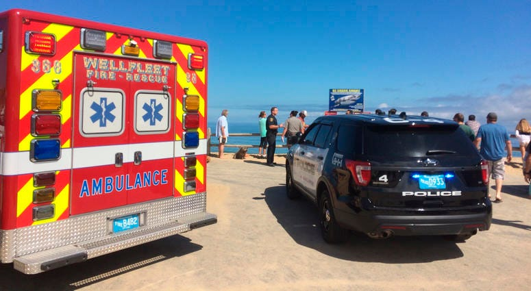 Shark Attack at Cape Cod