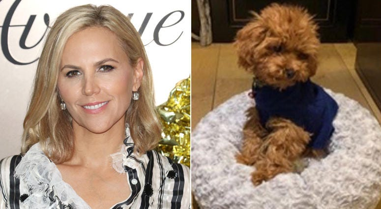 Tory Burch and her missing dog