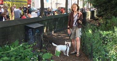 Central Park Dog Walker