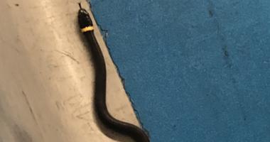 Snake at Newark Airport