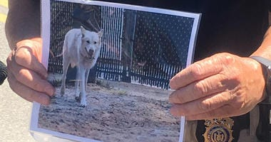 Holtsville Missing Wolf