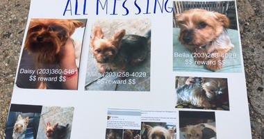 Bridgeport Missing Dogs