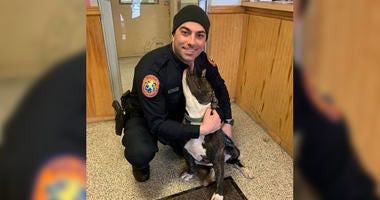 PItbull rescued on Long Island