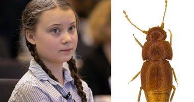 Greta Thunberg Beetle