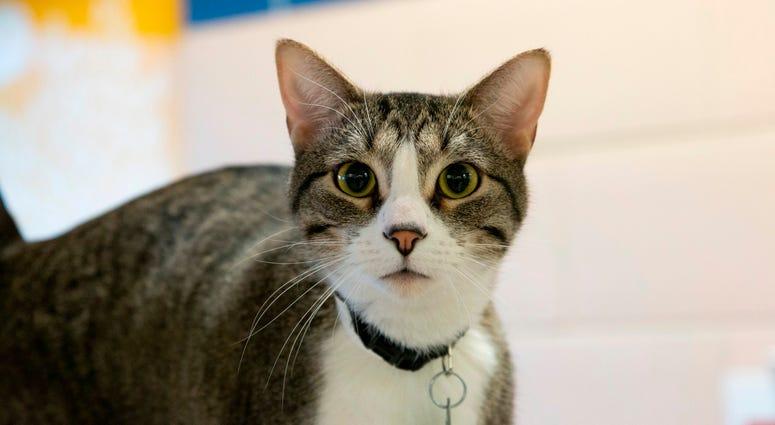 Cat: Robert
