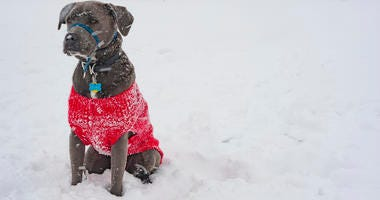 A dog in sweater in the snow