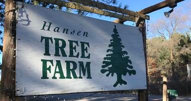 The Hansen Tree Farm located in Anoka, MN.