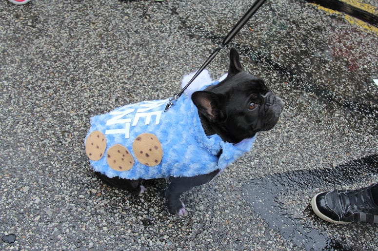 Pet Halloween Costume Ideas