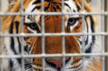 Netflixs Tiger King