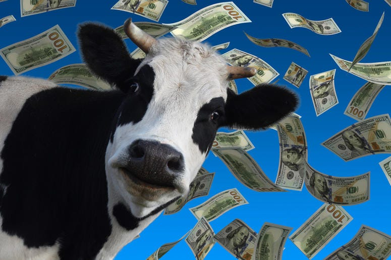Play Cash Cow on Y108