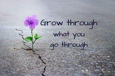 Quote: Grow Through What You Go Through