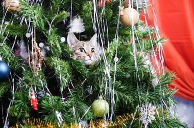 Christmas Tree pets