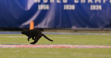 Game between the New York Giants and the Dallas Cowboys is delayed as officials try to remove a black cat from the field