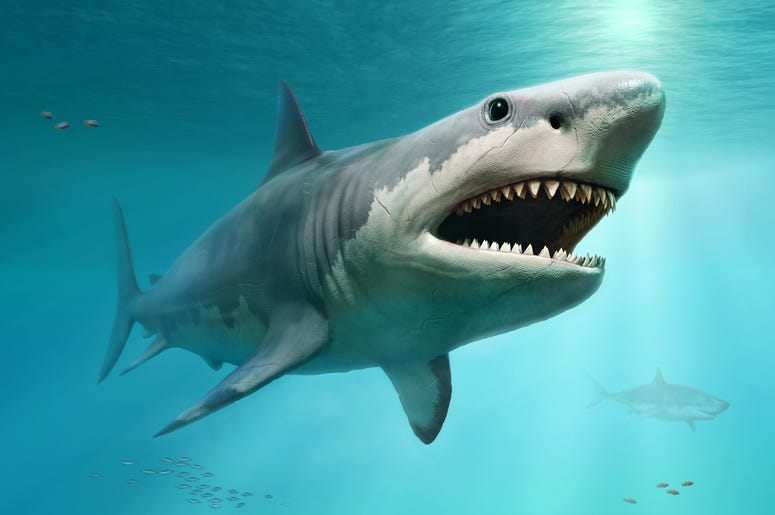 getty shark