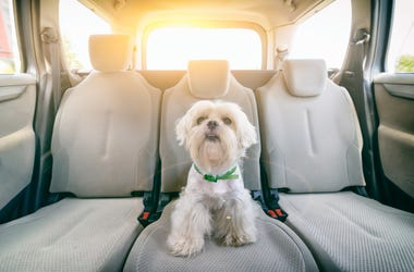 You can now bring your pets in an Uber.