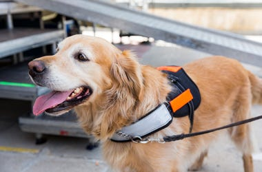 The U.S. Department of Transportation could limit service animals allowed in flight.
