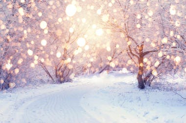 Snowy Forrest With Lights