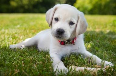 Pet stores will fight to block a new measure banning puppy mills.
