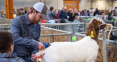 Sheep are groomed before being shown in the 104th Pennsylvania Farm Show in Harrisburg, Saturday, January 4, 2020. Ydr Cc 1 4 20 Farm Show