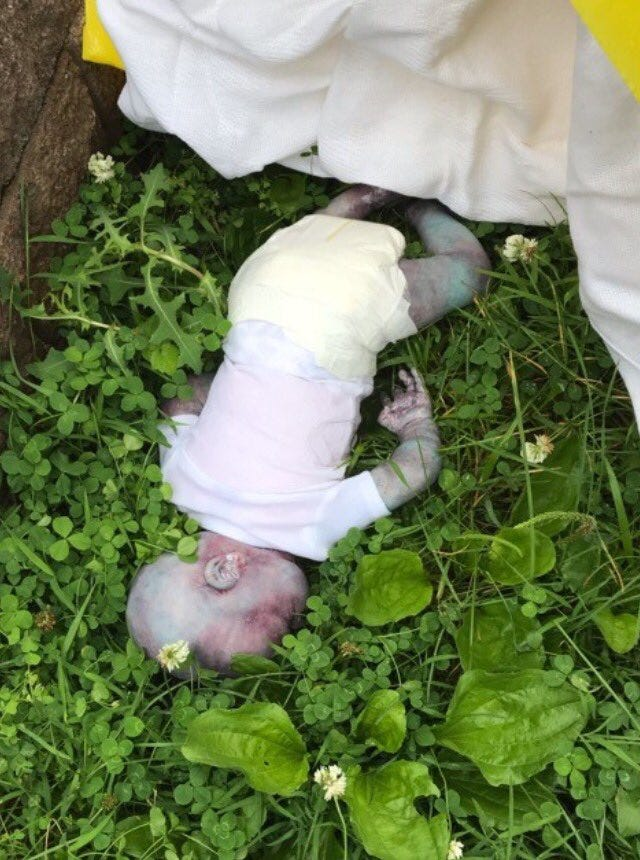 Doll believed to be a dead baby found in Queens
