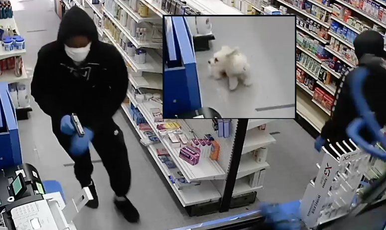 Dog pharmacy robbery