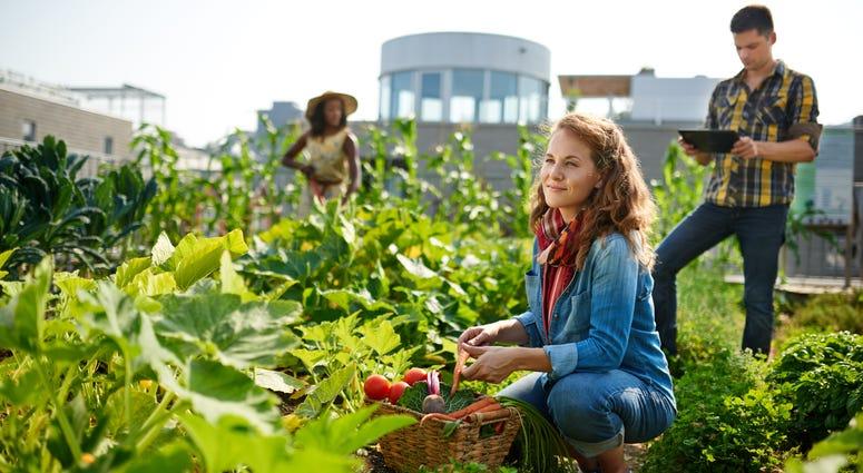Rooftop outdoor garden in the city