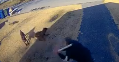 Dogs attack NJ
