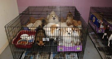 Puppy mill NJ rescue