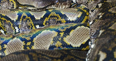 Python file image