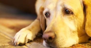 Sad Dog File Image