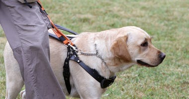 Seeing eye dog file