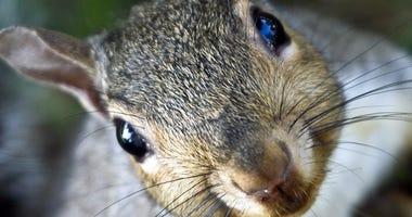 Squirrel file image.