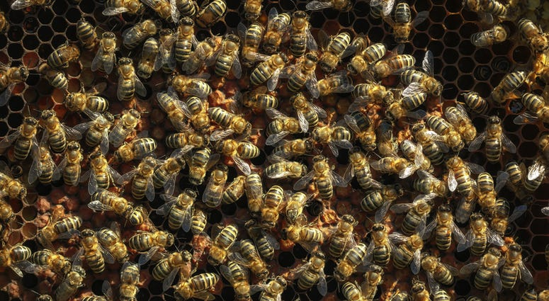 Bees file image
