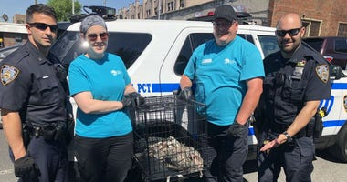 NYPD Guineafowl