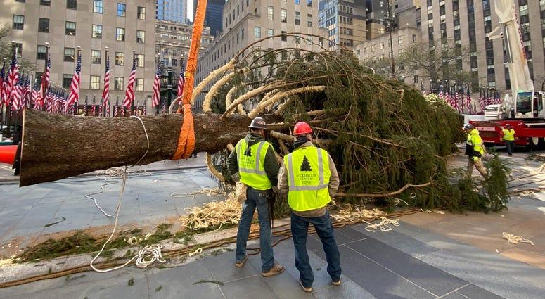 rockefeller center tree arrives in new york city 1010 wins rockefeller center tree arrives in new