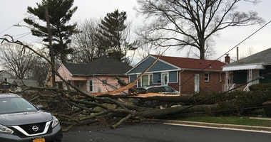 A deadly nor'easter took down trees around the area including this one in Hempstead.
