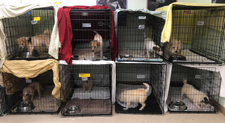 Recovered New Jersey dogs