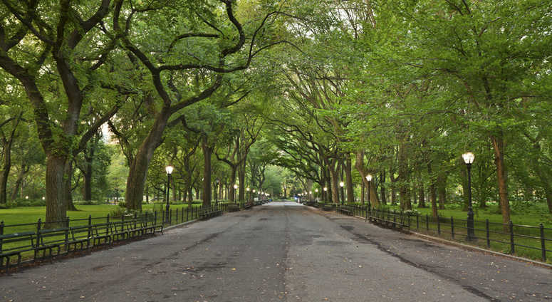 Mall area of Central Park.
