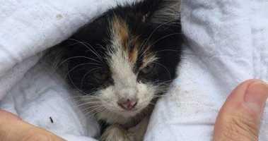 Rescued Kitten