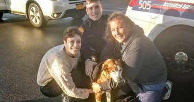 Dog rescue Suffolk County