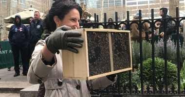 Bryant Park bees