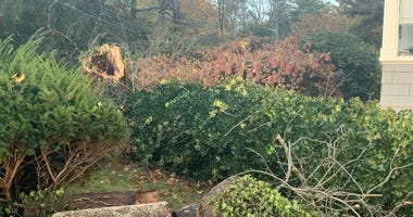 Tree falls on trick-or-treater in New Rochelle