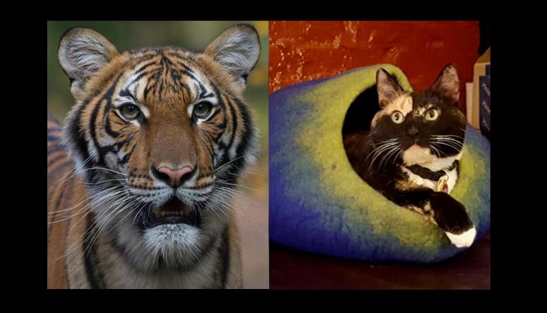(Photos: Bronx Zoo, Susan Richard)