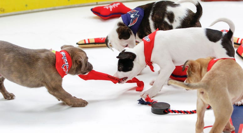 Caps Puppy Playoffs