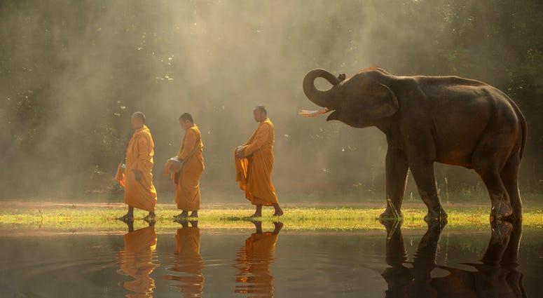 Thailand_Buddhist_monks_elephants